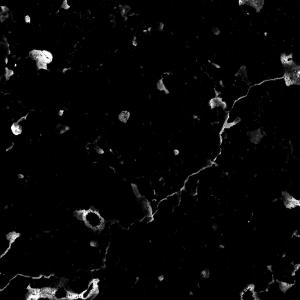 לוחות שיש גרניט טבעי - שחור וכתמים לבנים